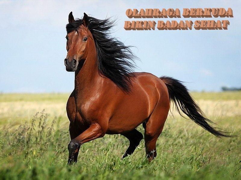 Olahraga Berkuda Bikin Badan Sehat